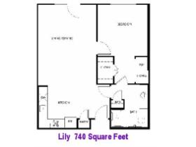 Lily-IL